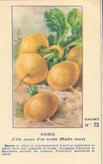 legume73 radis