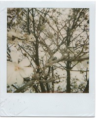 . (Kaitlyn Woodward) Tags: old school real polaroid this day d florist polariod skipped twasabeautifulday