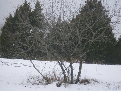 Sister Grove Snow 016