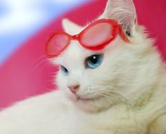 (UAE.eyes) Tags: white snow cat canon lovely corny 2010