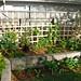 summer garden 23.02.10