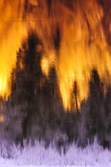 Morning Reflections - Merced River, Yosemite National Park, California (Jim Patterson Photography) Tags: california longexposure morning trees usa snow abstract color nature water pine reflections river nationalpark shore valley yosemite elcapitan mercedriver tuolumnemeadows reallyrightstuff gitzotripod mariposacounty nikkor3570mm singhray goldnbluepolarizer nikond300 markinsm20ballhead jimpattersonphotography jimpattersonphotographycom seatosummitworkshops seatosummitworkshopscom