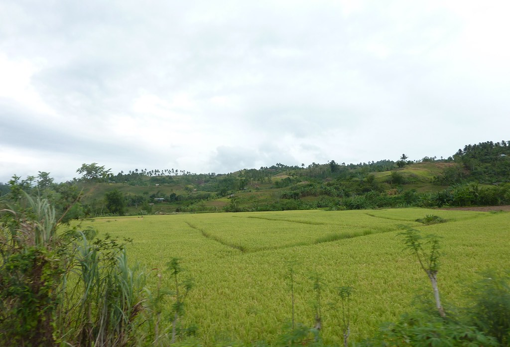Leyte-Ormoc (50)