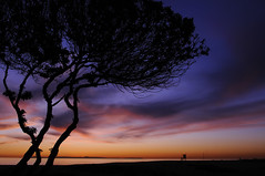Nightlight (scoburnphoto) Tags: ocean sunset red sky orange tree beach water yellow clouds landscape island colorful purple newport outline wispy wedge silloutte lifeguardtower coburn platinumphoto