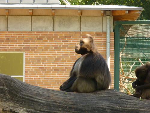 Ein Tag im Mai im Tierpark Berlin-Friedrichsfelde