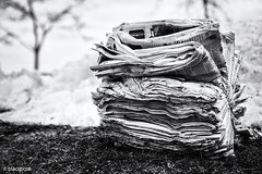 face news (blacqbook) Tags: newspapers paper news publication stack media stilllife texture grass bundle outdoors type blackandwhite snow newsprint closeup nature abandoned readingmaterial tree recyclable winter object lines copy blacqbook toronto