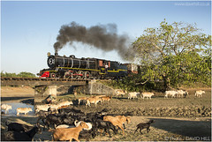 Busy scene At The Water Hole (channel packet) Tags: myanmar burma steam train animals livestock smoke photo montage davidhill