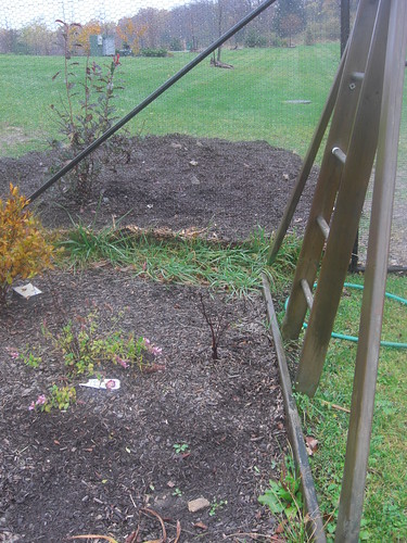 old swing set as grape arbor