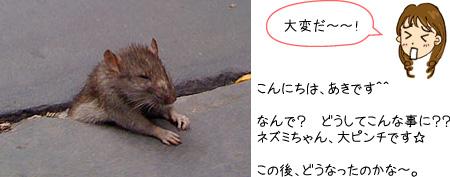 挟まれたネズミ
