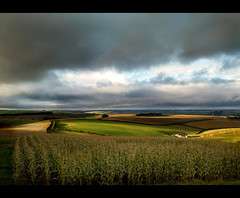 Fields and Stormy skys (Tatsuki's) Tags: sky cloud storm tree field dark corn moody sigma fields brooding dp1 foevon