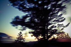 Sunset in motion (jade.francisca) Tags: california blue trees light sunset shadow red motion green field car yellow dark highway gradient depth lightroom calibrated