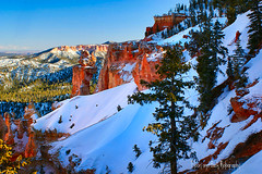 NO FOOTPRINTS ... (Aspenbreeze) Tags: trees winter snow nature outdoors utah spires redrocks brycecanyon rockformations brycecanyonnationalpark saariysqualitypictures coth5 aspenbreeze geotagfed