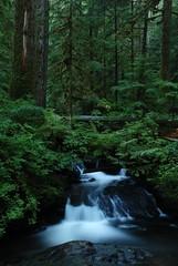 [フリー画像] [自然風景] [森林/山林] [滝の風景] [河川の風景]       [フリー素材]