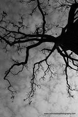 Spooky Old Tree - St Louis (kiwigran) Tags: trees winter tree nature branches stlouis missouri otw anawesomeshot spookyoldtree