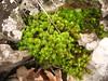 piante nane e frattali