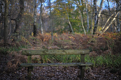 Resting place (Rivertay07 - thanks for over 3 million views) Tags: wood autumn tree bench rivertay seat d3 copyrightprotected broxbournewoods