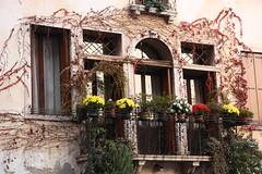 Marostica (Daniele Bonifazi) Tags: windows balconies marostica finestre balconi