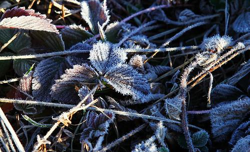 IMG_0927-w frozen