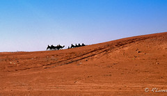DOUZ (Charo de la Torre) Tags: africa camera travel viaje naturaleza me nature canon photography holidays flickr mediterraneo natural muslim spotlight oasis arabe desierto ramadan vacaciones cultura camello movistar caravana douz cartago medioambiente ecologia musulman tunez tunicia rluna1982 rluna instagram instagramapp