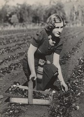 Picking strawberries in the Redlands (State Library of Queensland, Australia) Tags: woman pose women basket strawberries statelibraryofqueensland pickingstrawberries vintagehair redlandbay