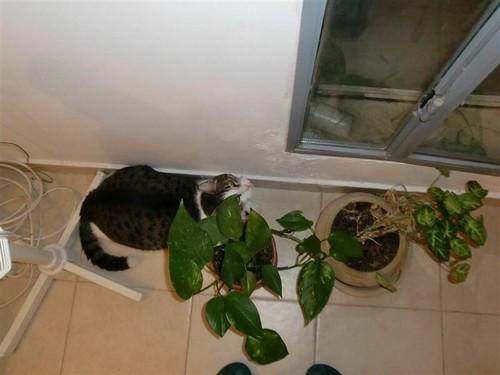 Attack Plants