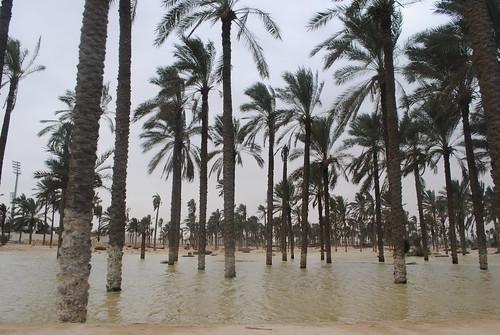 Sinai floods