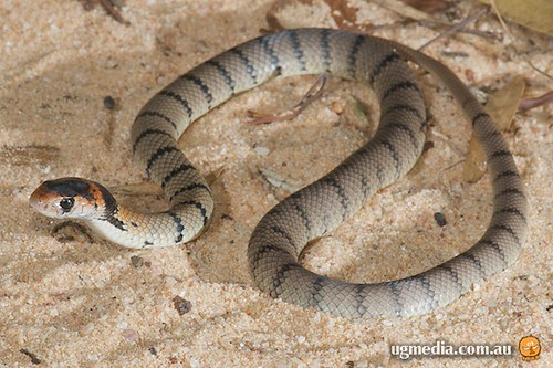 how to get rid of brown snake in my garage
