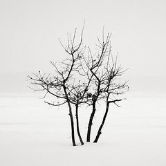 Frozen beach V (Maria Stromvik) Tags: longexposure winter sea snow cold tree ice beach strand is vinter sweden stockholm snowstorm balticsea sn trd liding stersjn mlaren ndfilter snstorm hoyand8 skrstra