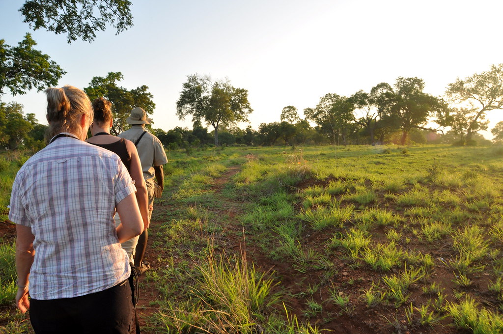 Day 8 - Walking the Green Hills of Africa