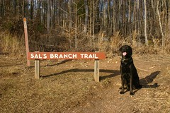 Bonzer at Sal's Branch Trail Photo