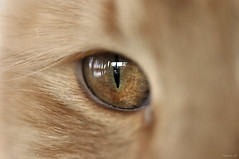 The All Seeing Eye (r3dst0rm) Tags: macro eye cat austria carinthia katze auge villach d90 nikkor105f28