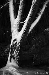 Puig-reig en Negre de nit i Blanc de neu - 0306 (Pep Companyó - Barraló) Tags: barcelona set de nevada 8 bn catalunya blanc negre neu nit mig 2010 plaça març bergueda josep serie2 puigreig companyo companyó barralo