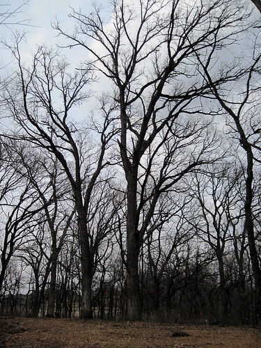 Hawks Bluff Park3- MAR 19 2010