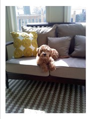 Mollie catching some rays in the sunroom ! She's one of Cupcake and Chewy's girls !
