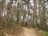 il bosco comincia