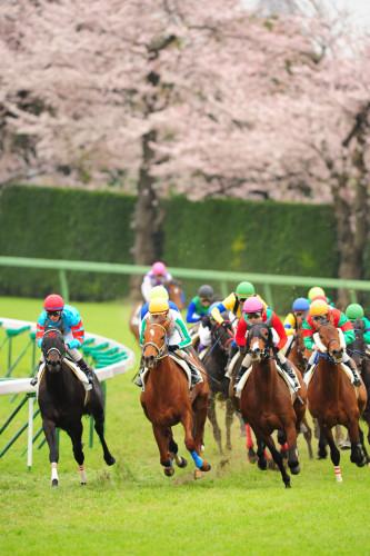 SAKURA Race