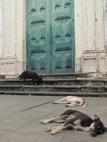 Salvador Dogs