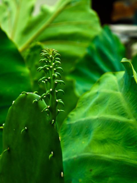 IMG_0657 Cactus