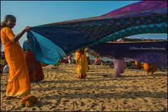 Saris 2.  Kanyakumari (Claire Pismont) Tags: asia asie inde india indedusud indian kanyakumari pismont clairepismont colorful couleur color colour woman sari travel travelphotography tamilnadu travelshot colors laundry drying saridrying saris