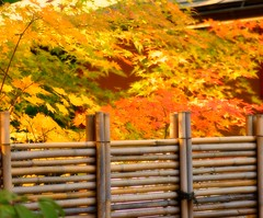 Portland Japanese Gardens (bunbunlife) Tags: autumn sun color tree fall gardens fence portland japanese maple gate glow vibrant bamboo