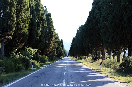 Viale dei cipressi - Bolgheri