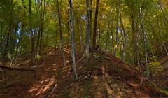 Wood (Shadow13777) Tags: wood autumn trees light italy tree colors alberi digital canon eos europa europe italia autunno colori grandangolo vicenza bosco veneto schio faggi widenagle tokina1116mmf28 scattifotografici allegrisinaceosidiventa