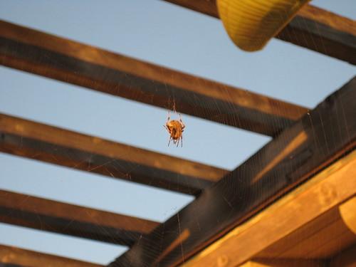 halloween morning spider