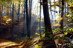 Sun shining through the Trees (Tobi_2008) Tags: autumn trees sun color detail nature alberi forest germany deutschland saxony herbst natur arbres sachsen tobi sonne wald farbe bume allemagne soe germania gegenlicht naturesfinest anawesomeshot diamondclassphotographer flickrdiamond flickraward