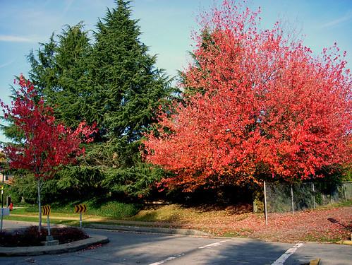03-11-2009_autumn_colors_rs