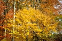 Herbst im Felsenmeer