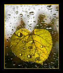 Let me in! (Andrea Kennard) Tags: window wet water glass leaf drops drips veins platinumheartaward yourpassionawards