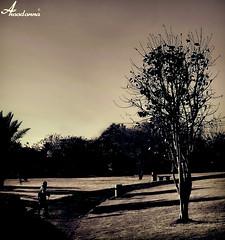 ~ (ANOODONNA) Tags: canon 400d alrasheed alanood   flickrunitedaward anoodonna