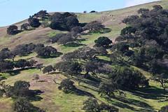Steep hill (Håkan Dahlström) Tags: california usa tree verde green nature forest landscape groen unitedstates united hill vert states grün sanfelipe grön grn