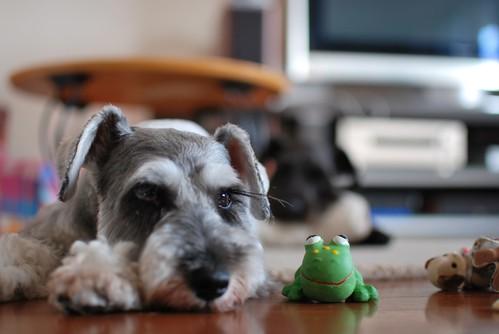 ugo w/frog